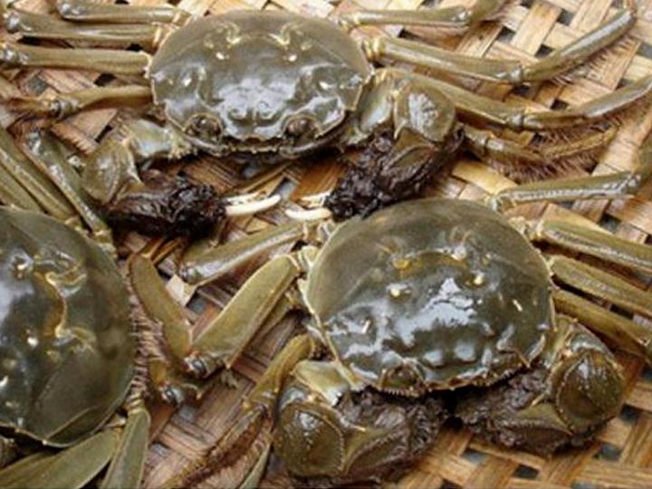 redwire-singapore-crab-brain-damage