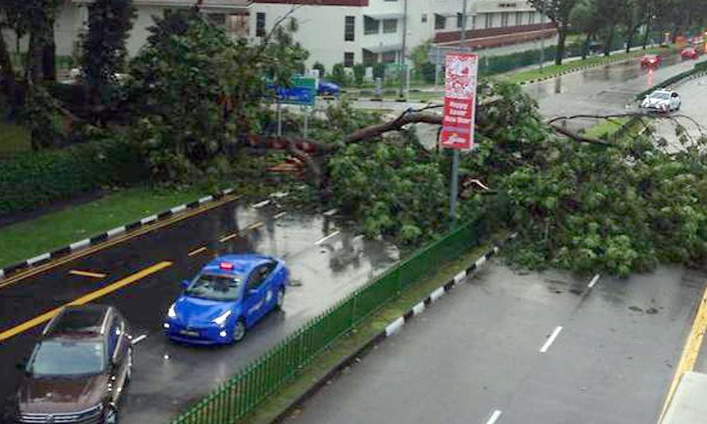 redwire-singapore-marine-parade-tree-fall