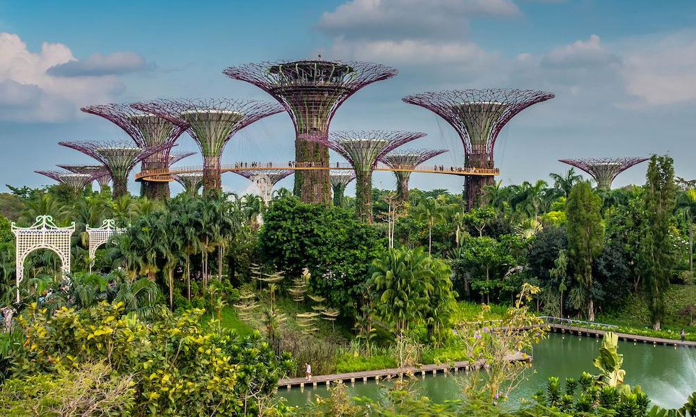 redwire-singapore-botanic-gardens-x842